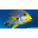 apo_reef_fish_02
